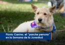"""Picnic Canino, el """"parche perruno"""" en la Semana de la Juventud"""